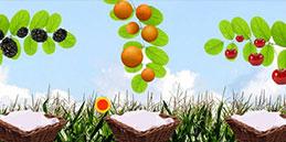 Les enfants jouent, accompagnés par les mamans et les papás. Jeux pour tout petits: Collecte de fruits!