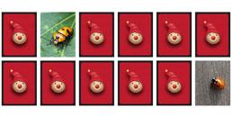 Jeux de mémoire pour enfants: Les Insectes!